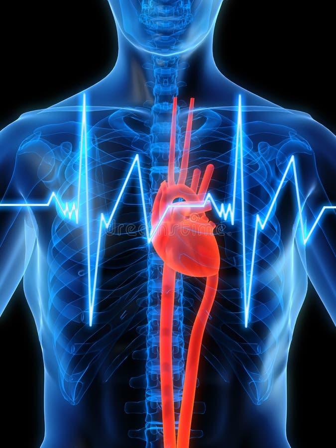 hjärtslag vektor illustrationer