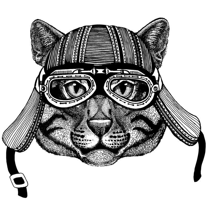 Hj?lm f?r motorcykel f?r l?st kattcyklistdjur b?rande r vektor illustrationer