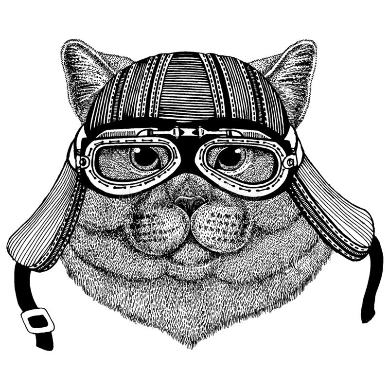 Hj?lm f?r motorcykel f?r l?st kattcyklistdjur b?rande r stock illustrationer