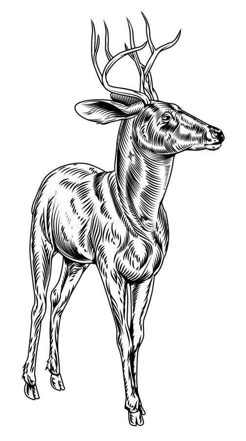 Hjortar för fullvuxen hankronhjort för tappningstilträsnitt royaltyfri illustrationer