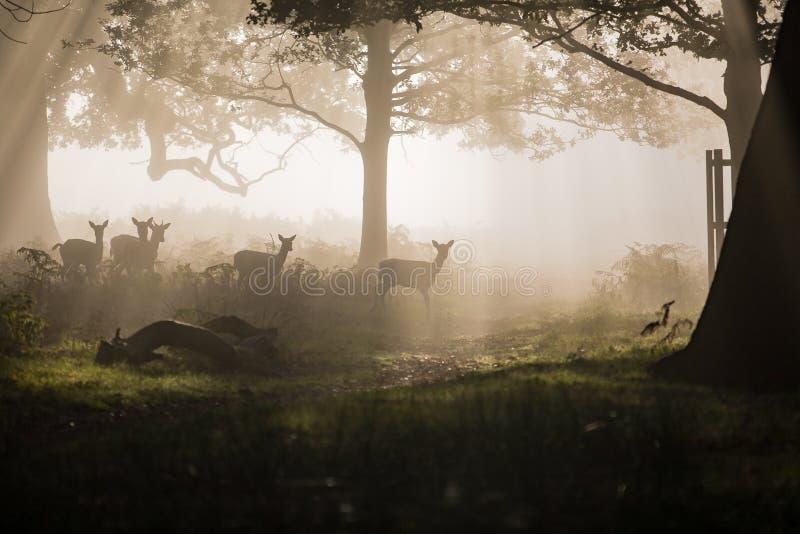 Hjortar i trät fotografering för bildbyråer
