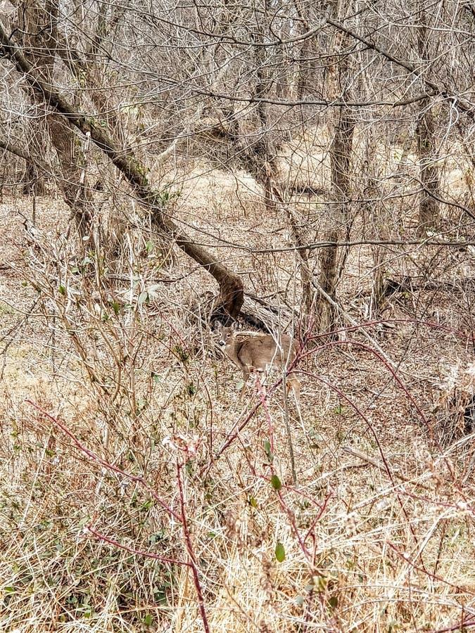 Hjortar i våtmark parkerar arkivbild