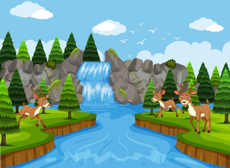 Hjortar i vattenfall- och träplats vektor illustrationer