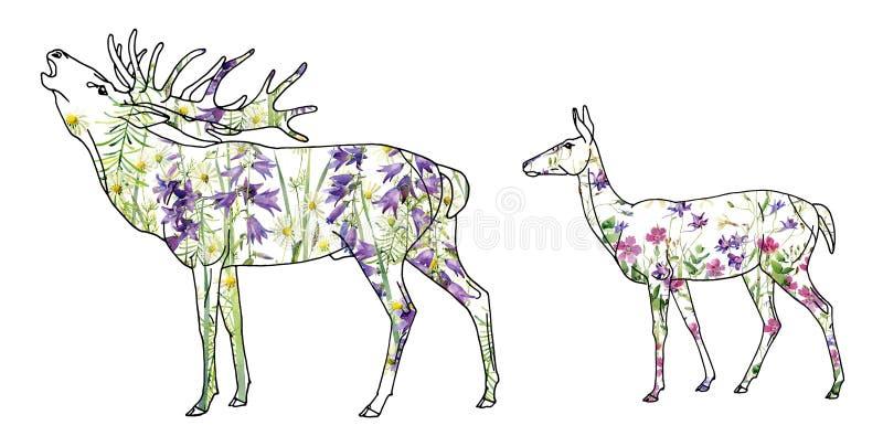 Hjortar med en hjortkvinnlig av lösa blommor för vattenfärg royaltyfri illustrationer