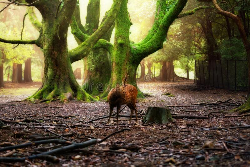 Hjortar på parkera Nara arkivbilder