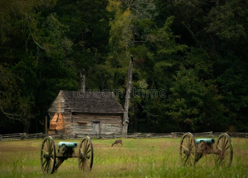 Hjortar på Shiloh arkivbilder