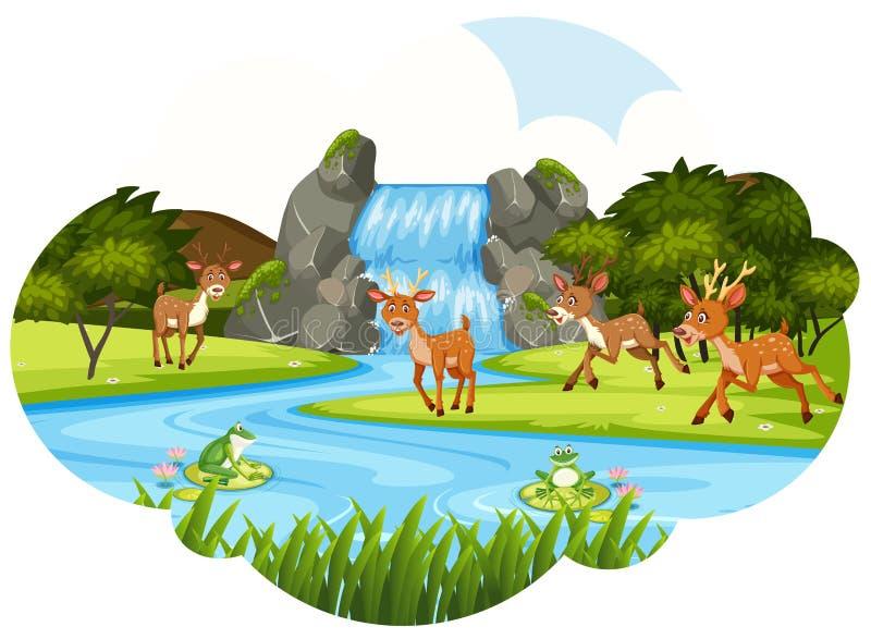 Hjortar på vattenfallet royaltyfri illustrationer