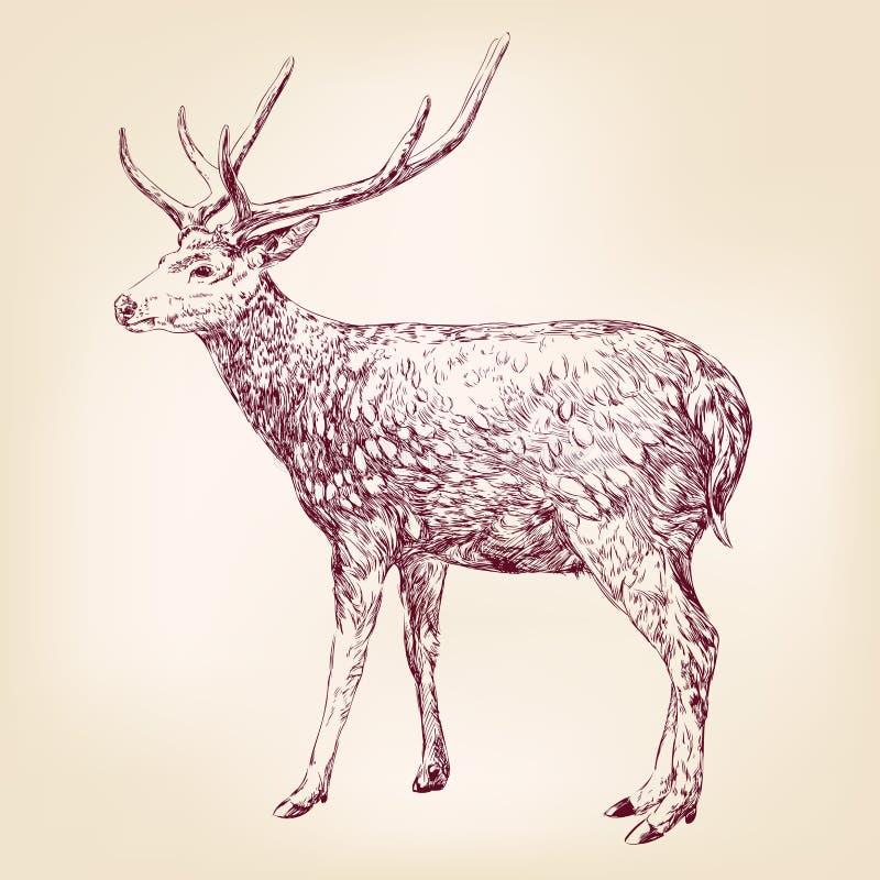 Hjortar räcker utdragen vektorllustration vektor illustrationer