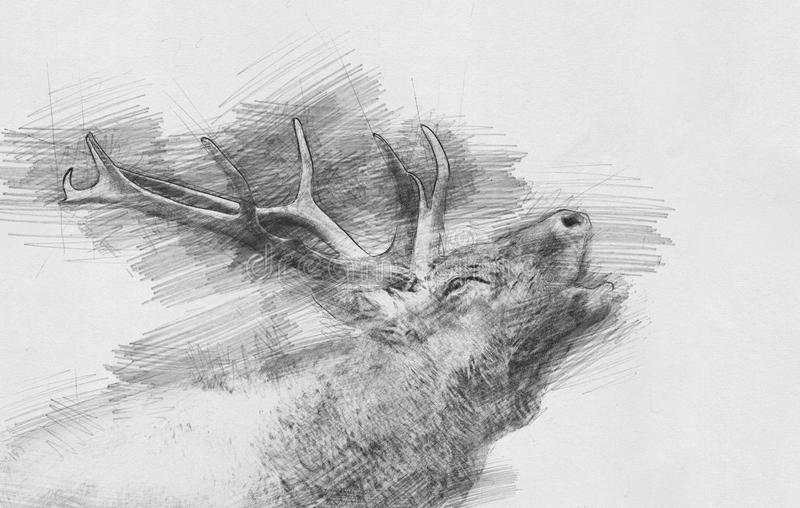 Hjortar Skissa med blyertspennan vektor illustrationer