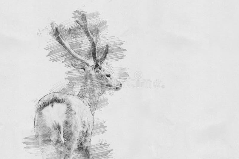 Hjortar Skissa med blyertspennan royaltyfri illustrationer