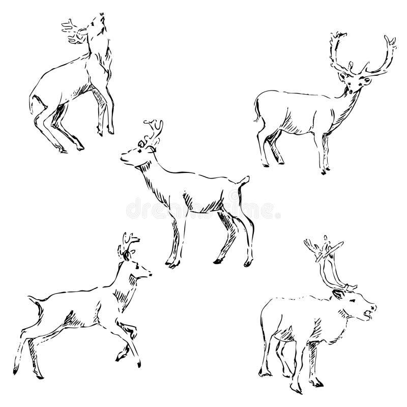 Hjortar skissar Blyertspennateckning vid handen royaltyfri illustrationer