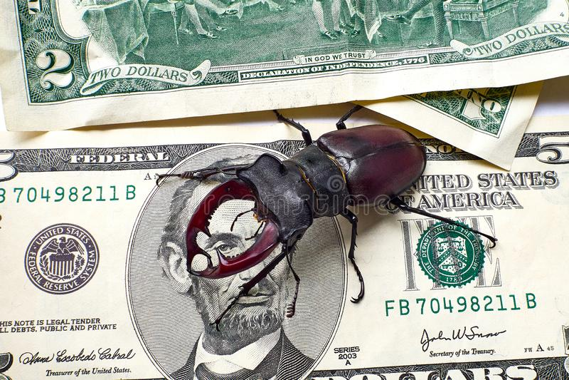 Hjortar skjuter ut den Lucanus cervusen på fem US dollar Lincoln ser skalbaggen med ett öga Begrepp av pengarskalbaggen royaltyfri fotografi