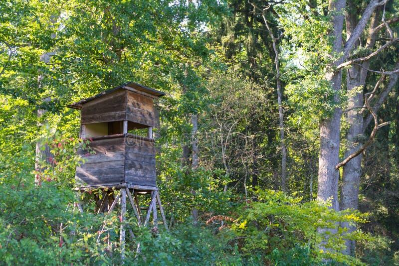 Hjortar står i den naturliga reserven Schoenbuch som är mest forrest i Tyskland royaltyfri bild