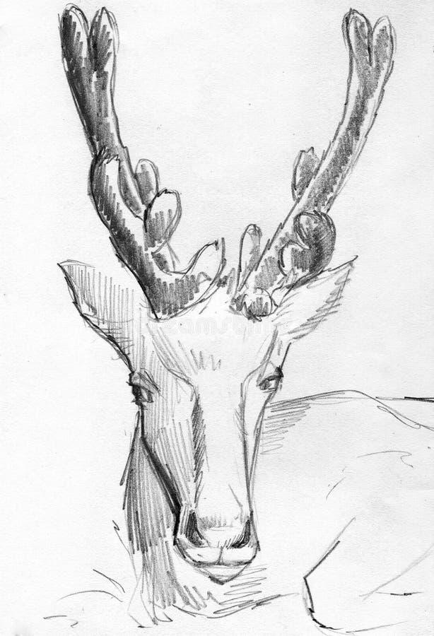 Hjortblyertspennan skissar royaltyfri illustrationer