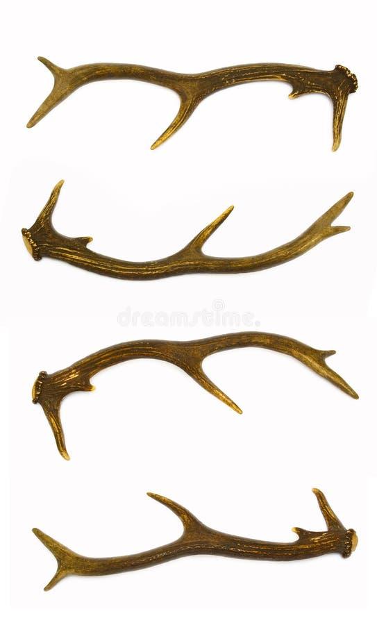 Hjorthorn på kronhjort royaltyfri foto