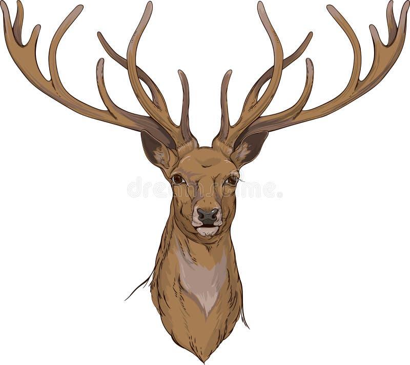 Hjorthuvud med horn royaltyfri illustrationer