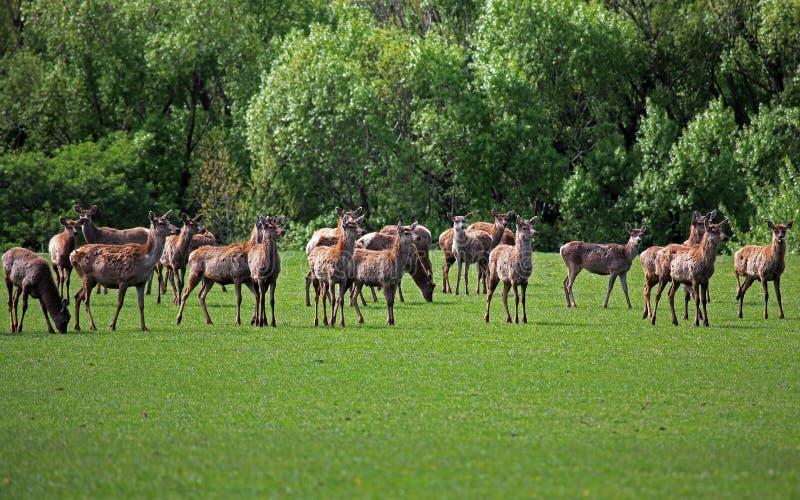 Hjortlantgård royaltyfria foton