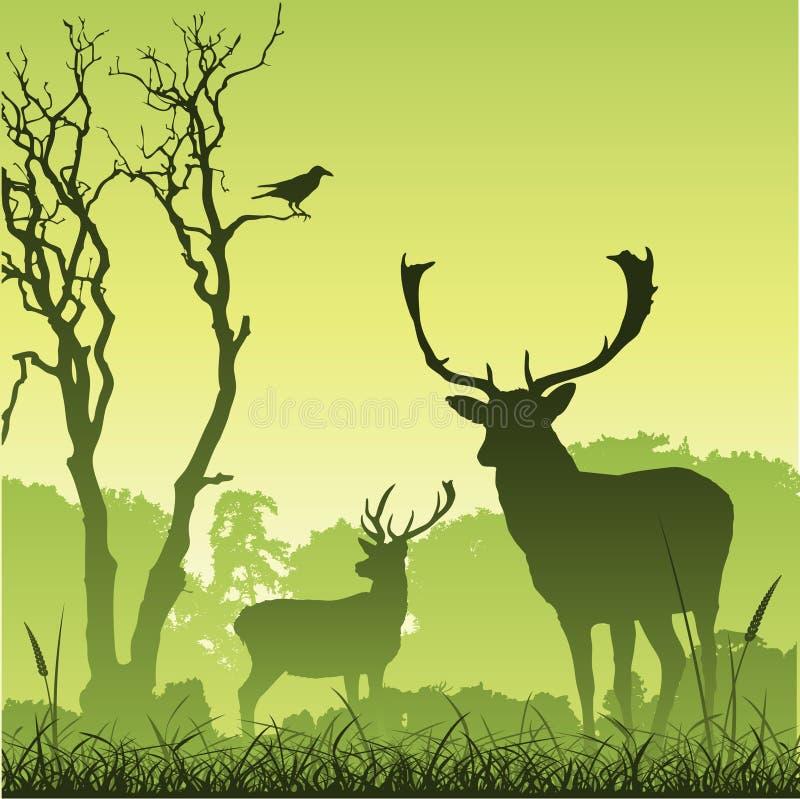 hjortmanligfullvuxen hankronhjort vektor illustrationer