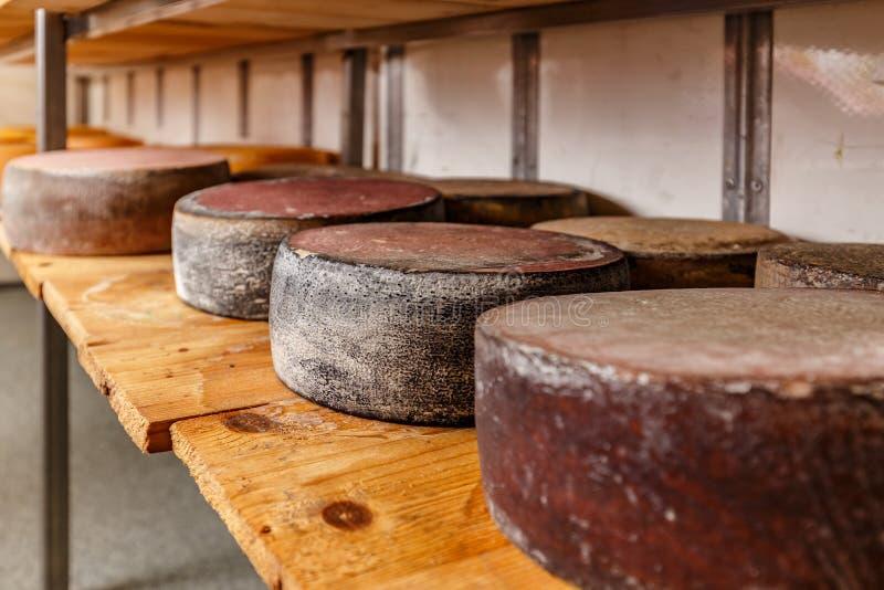 Hjul av att åldras ost royaltyfria bilder