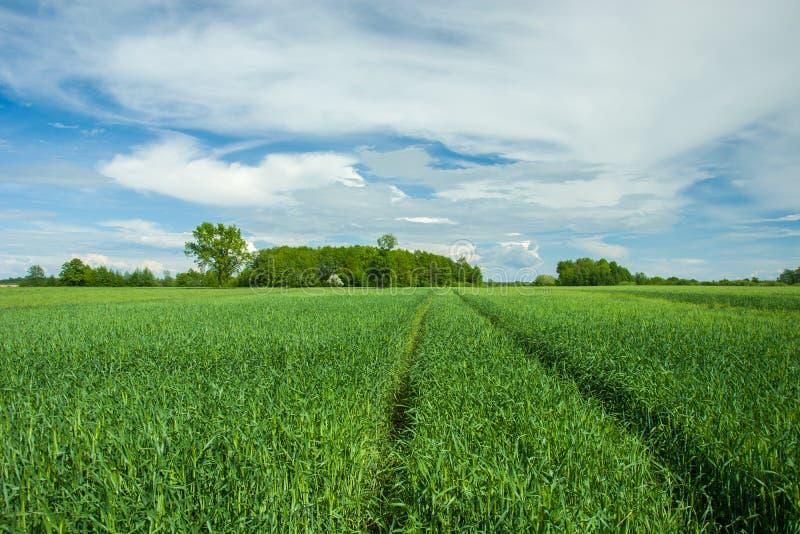 Hjulspår i ett grönt fält, träd på horisonten och moln på himlen fotografering för bildbyråer