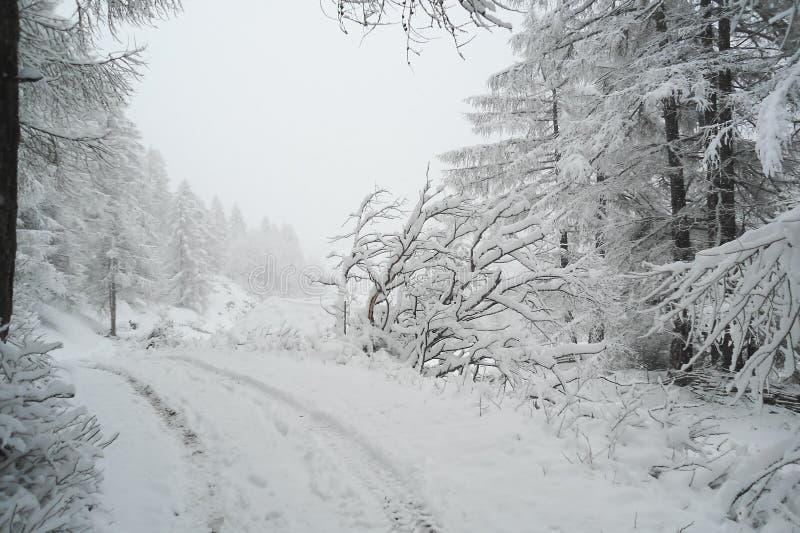 Hjulspår på dentäckte vägen till och med vinterbarrskogen fotografering för bildbyråer