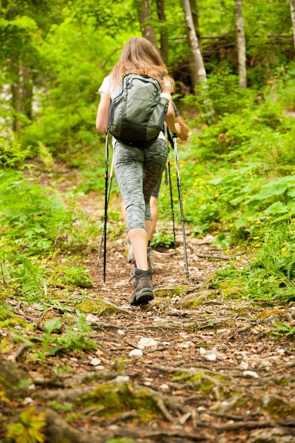 hking在一条狭窄的道路的活跃远足者在早期的春天的森林里 免版税库存图片