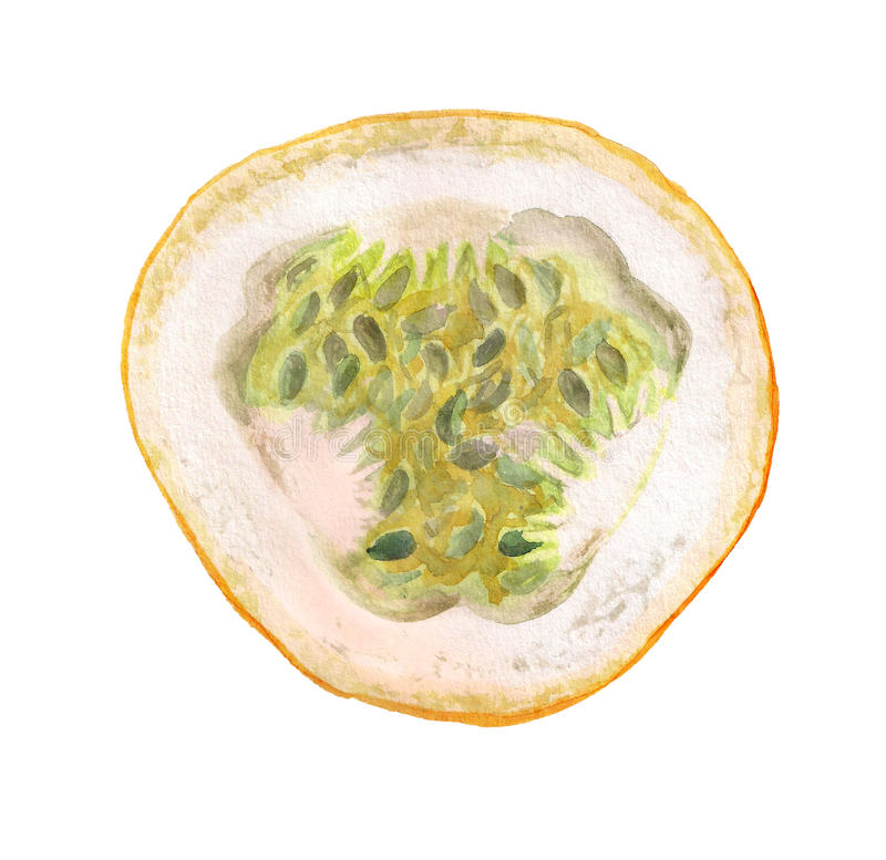 Hlf of passiflora fruit. Watercolor image of half of passiflora fruit on white background royalty free illustration