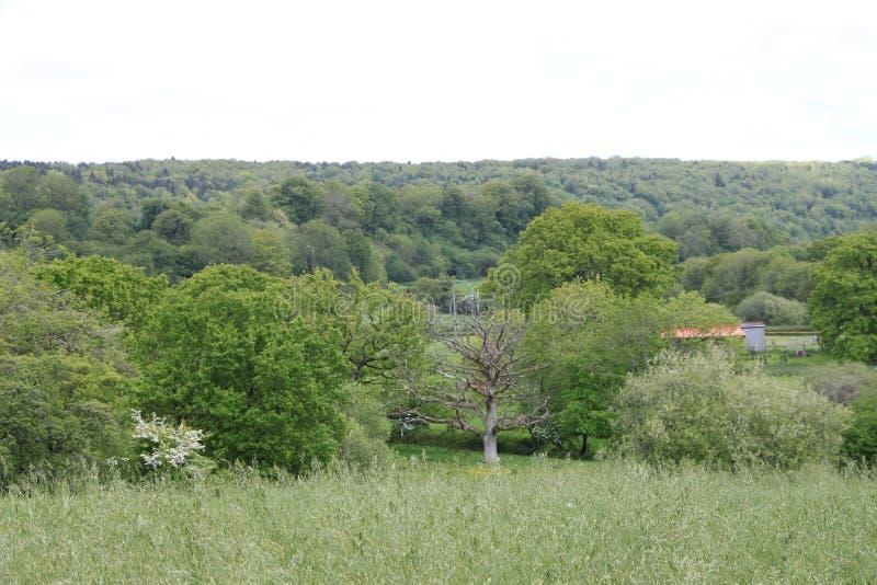 Hampshire Landscape, uk stock image