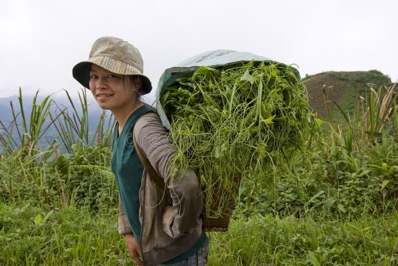 hmong Laos aux légumes de vallée de transports images stock