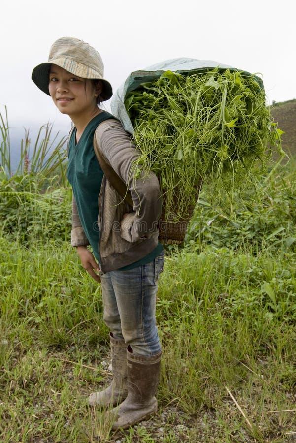 hmong Laos aux légumes de vallée de transports photographie stock