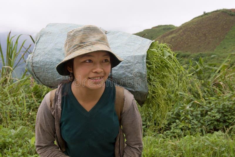 Hmong transporta vegetais ao vale, Laos fotos de stock