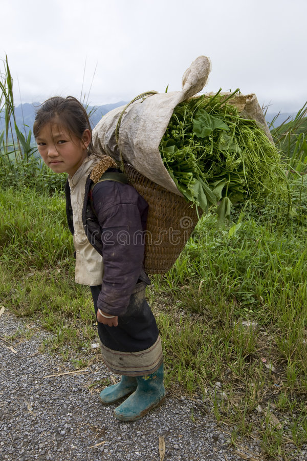 Free Hmong Transports Vegetables To The Valley, Laos Stock Photo - 6434880