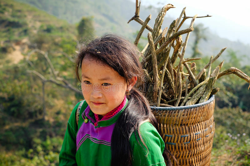 Hmong tribe girl on paddy field. Sapa, Vietnam - April 15, 2016: Little asian girl from hmong tribe in traditional clothes carry wood on the basket in mountain stock photo