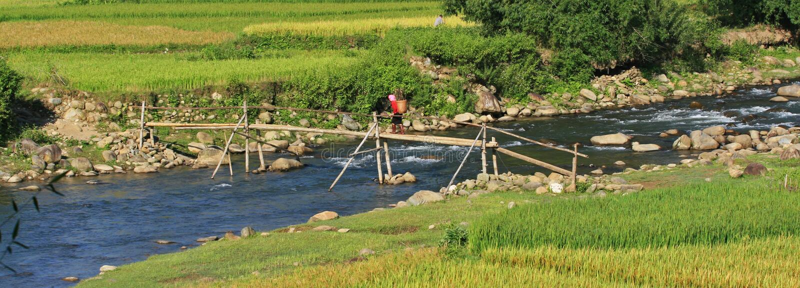 Hmong woman passing a bamboo bridge royalty free stock photos