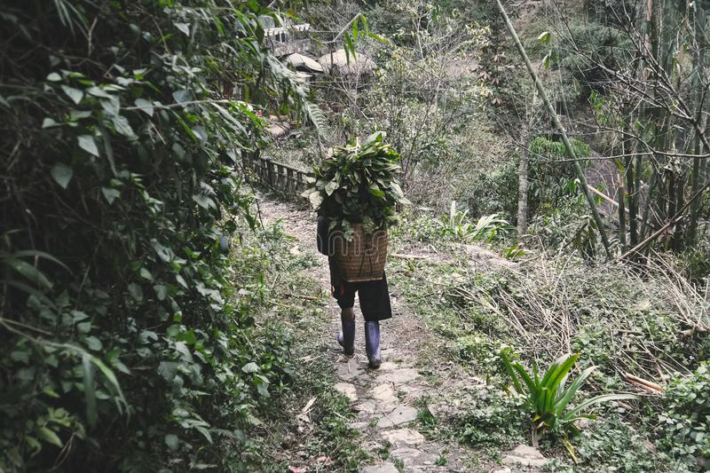 Hmong women is carrying blanket on the way home at SAPA, Northern Vietnam. North Vietnamese woman carries a basket with leaves royalty free stock photos
