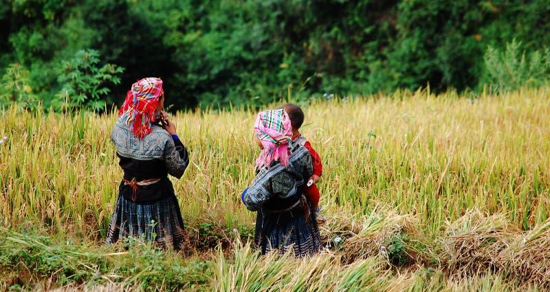 Hmongvrouwen die aan het padieveld bij Sapa-stad, noordelijk Vietnam werken royalty-vrije stock afbeeldingen