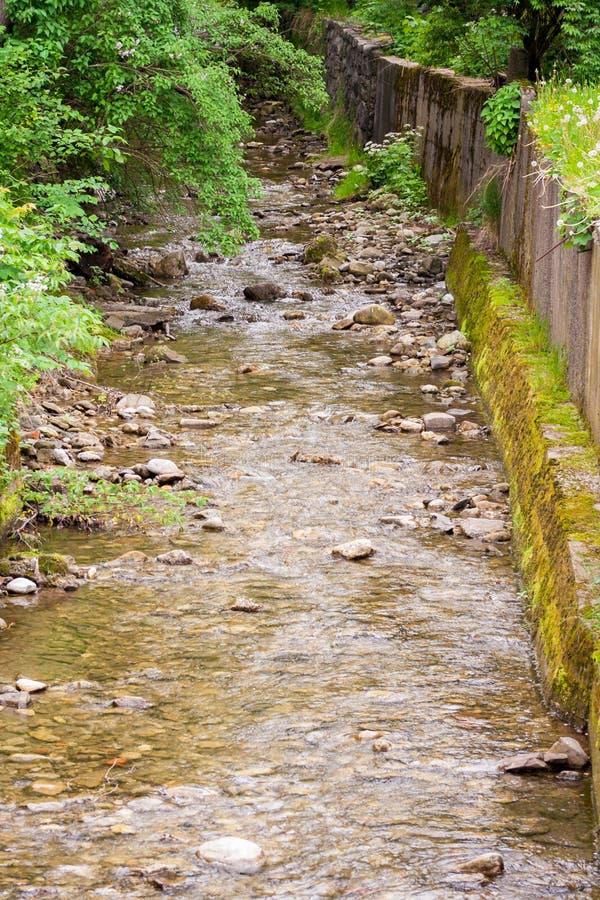 Ho av bergströmmen Runt om mycket av grönska royaltyfri foto