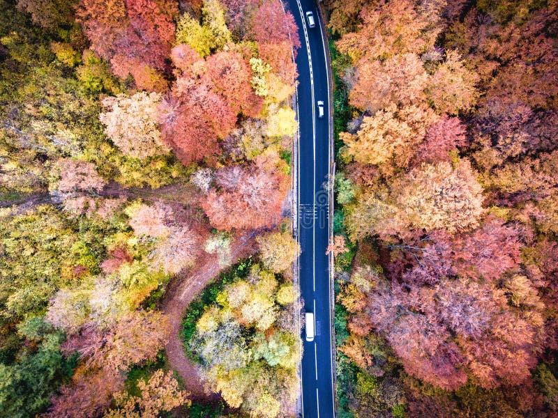 Ho för slingrig väg skogen i Transylvania, Rumänien royaltyfri bild