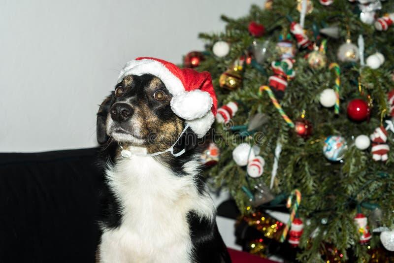 Ho Ho Ho Im Święty Mikołaj fotografia stock