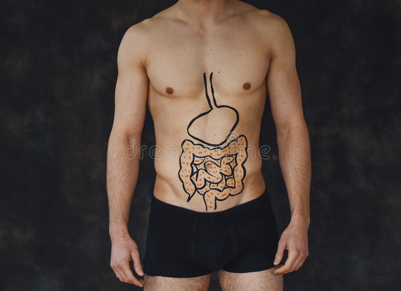Ho intestini sani immagine stock