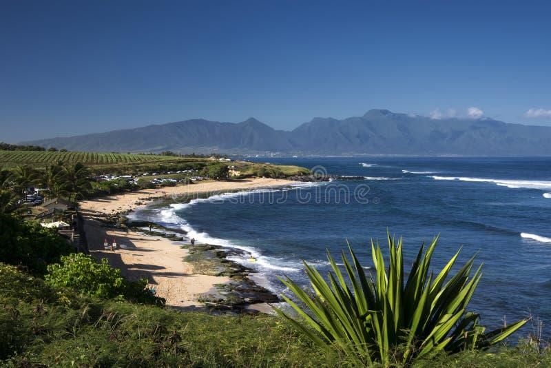 Ho'okipa海滩公园,毛伊,夏威夷北部岸  库存照片