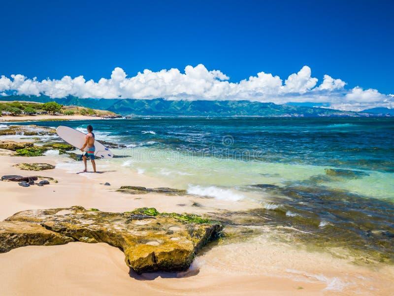 Ho`okipa Beach Park i Maui Hawaii, vindsurfing-plats, stora vågor och stora Turtles fotografering för bildbyråer