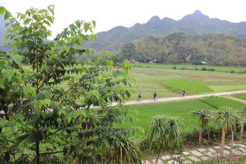Hoa Binh Vietnam - April 11,2015: H?rligt landskap med den trevliga v?gen och gr?na f?lt p? b?da sidor royaltyfri fotografi