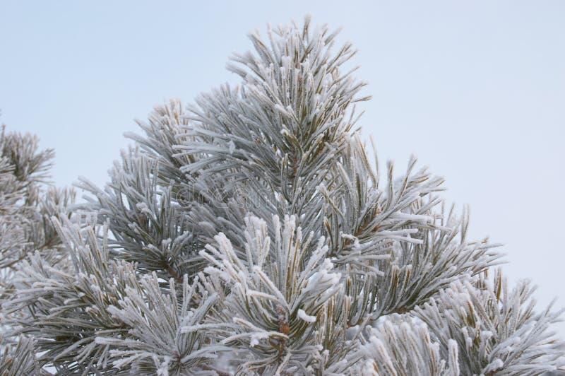 Download Hoar заморозка стоковое изображение. изображение насчитывающей фильтр - 492505