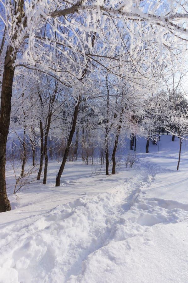 Hoar behandelde bomen in het winterse verticale park, royalty-vrije stock foto