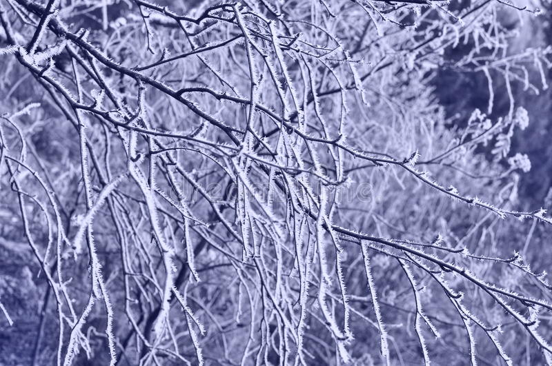 Download Hoar-frost stock photo. Image of winter, tree, background - 16839008