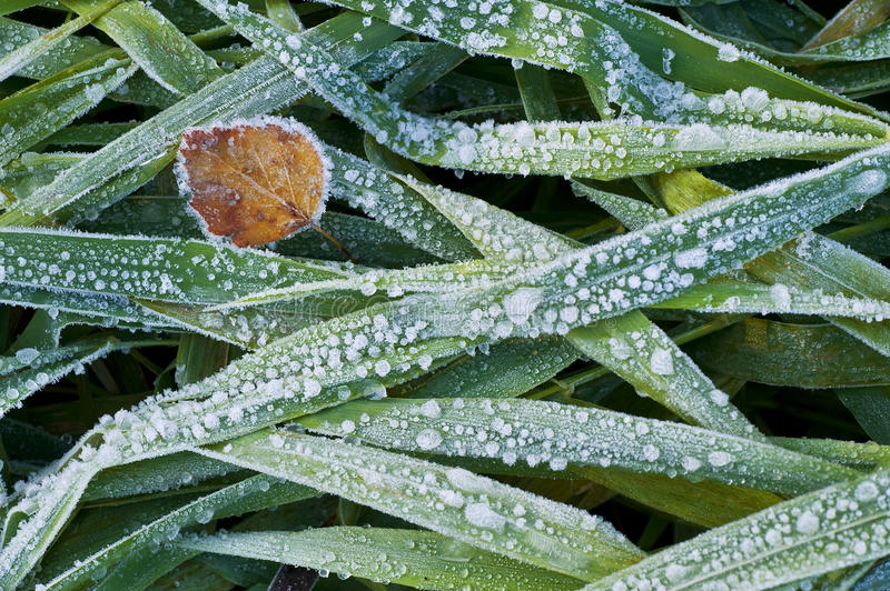 Hoar frost. Autumn hoar frost on the green grass royalty free stock photography
