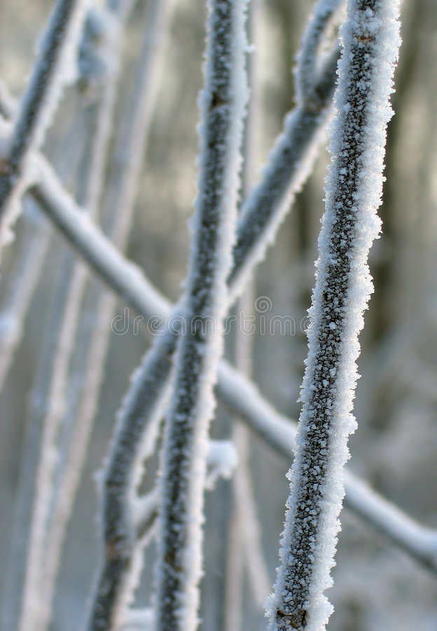 Hoar-frost. On the branches royalty free stock photos