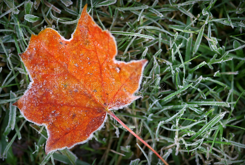 Download Hoar-frost stock photo. Image of plant, autumn, fallen - 3357494