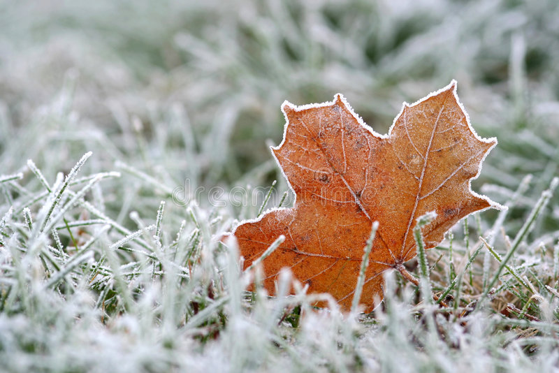Hoar-frost imagem de stock